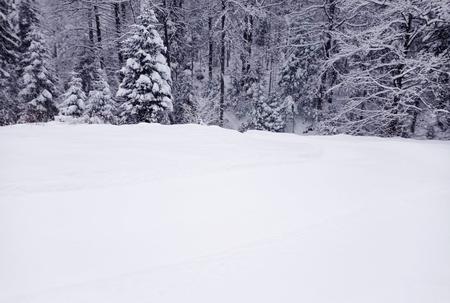 Fotografia trasy biegowej  (kliknięcie spowoduje powiększenie obrazu)