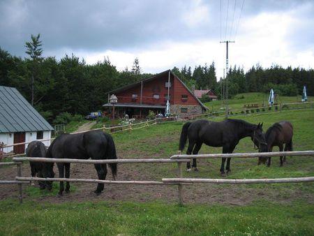 Ranczo Błatnia - konie (kliknięcie spowoduje powiększenie obrazu)