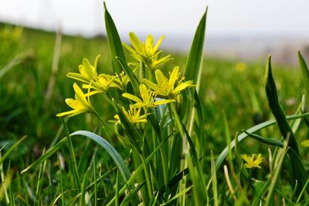 Kwiaty na ścieżce przyrodniczo-dydaktycznej po Górze Bucze (kliknięcie spowoduje powiększenie obrazu)