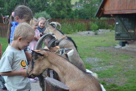 Kozia Zagroda- kozy (kliknięcie spowoduje powiększenie obrazu)