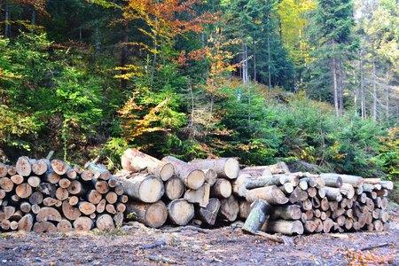 Bajkowy Szlak Utopca - skład drewna (kliknięcie spowoduje powiększenie obrazu)
