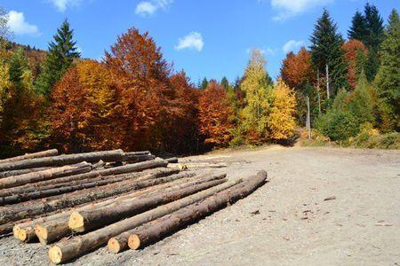 Szlak Wspomnień - skład drewna (kliknięcie spowoduje powiększenie obrazu)